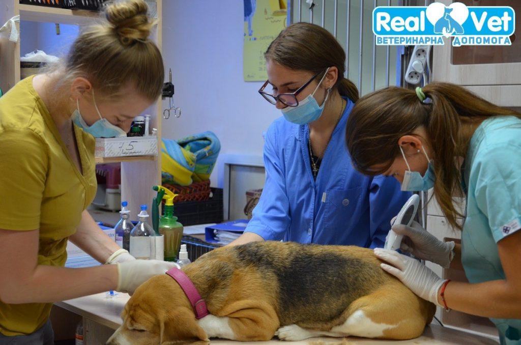 РеалВет - Клінічна діагностика тварин