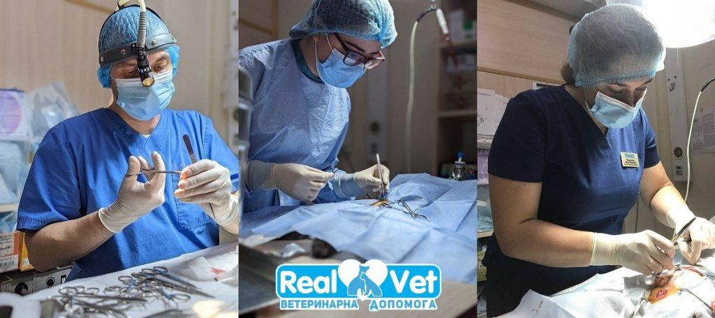 РеалВет - Хірургічні операції тваринам