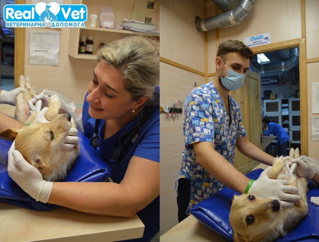 RealVet - Ультразвукова діагностика (УЗД) тварин